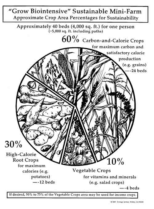 The 60 30 10 Crop Ratio Used In The GROW BIOINTENSIVE Method