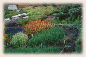 A Thriving GROW BIOINTENSIVE Garden